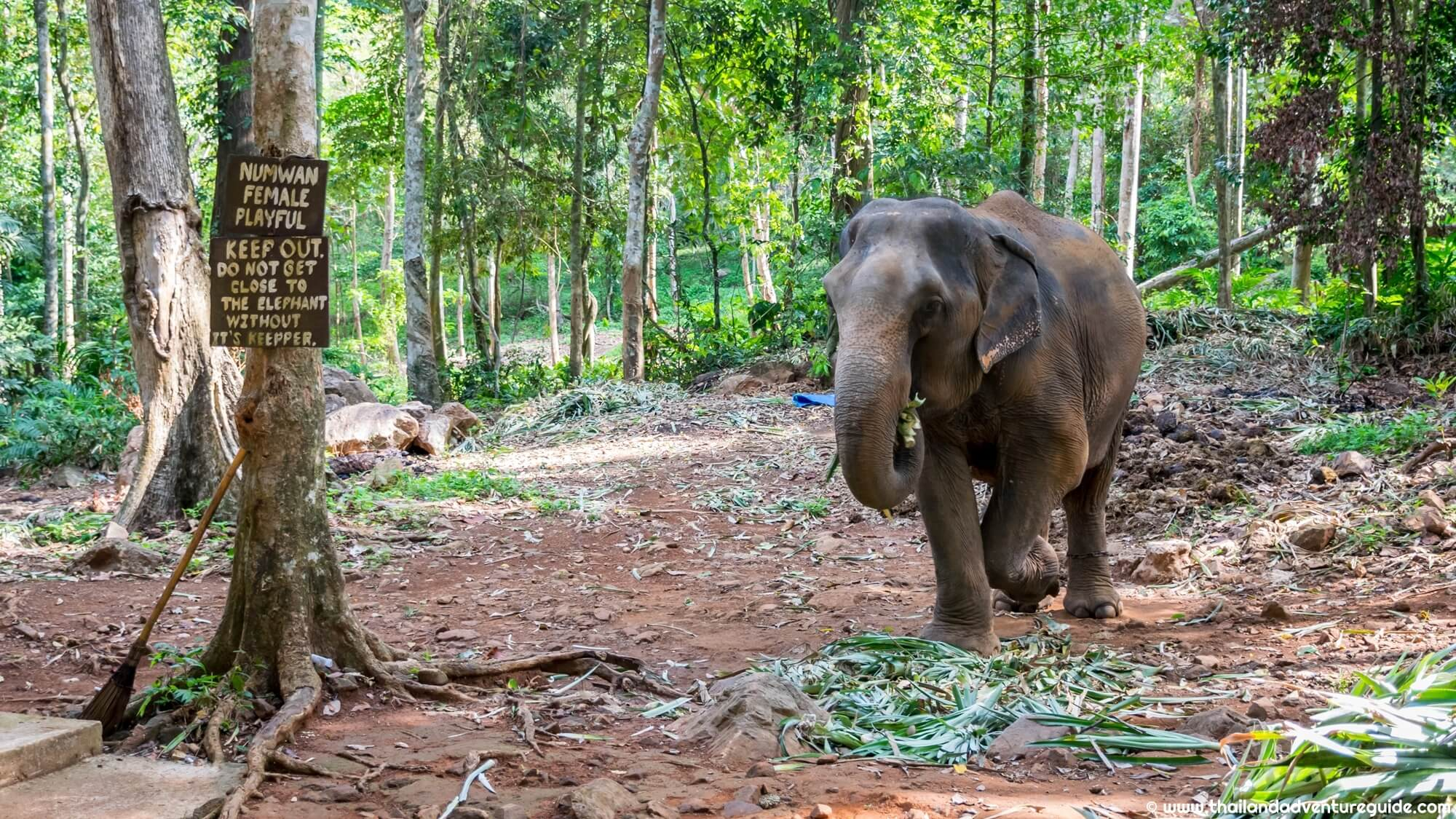 elefantrezervatum_thaifoldon_9.JPG