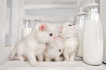 macska-terror.jpg