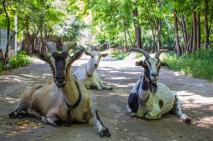 Útvonal ajánló: Csepel-szigeti félkör