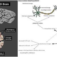 Agykárosító szteroidok? Anabolikus androgén szteroidok (AAS) alkalmazása és az agy károsodásának lehetősége