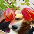 Laboros kutyák várják örökbefogadóikat