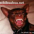 Discovery news: agresszív kutyafajták