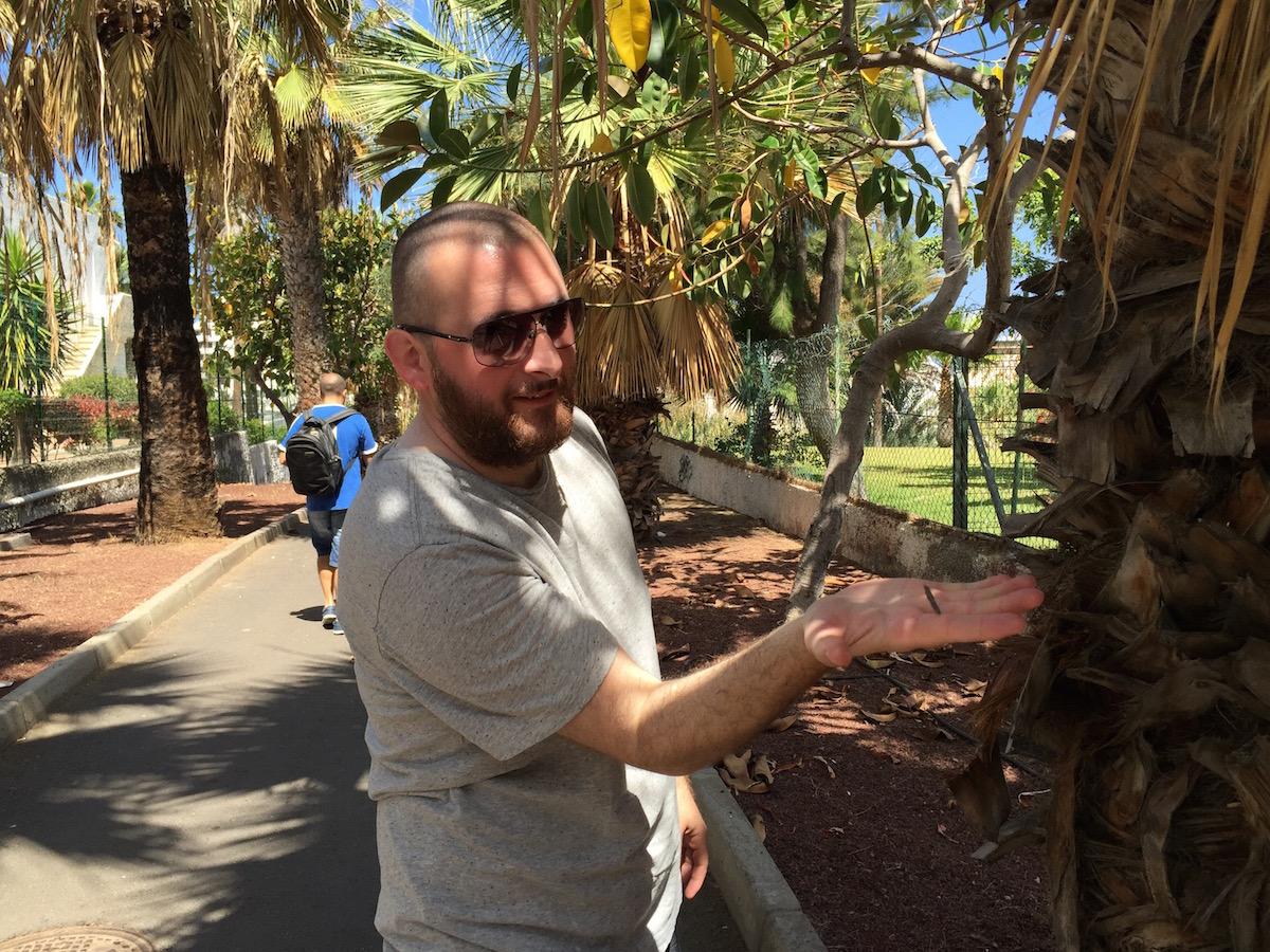 Feri tenyerébe állt a pálmafa - de cska kicsit