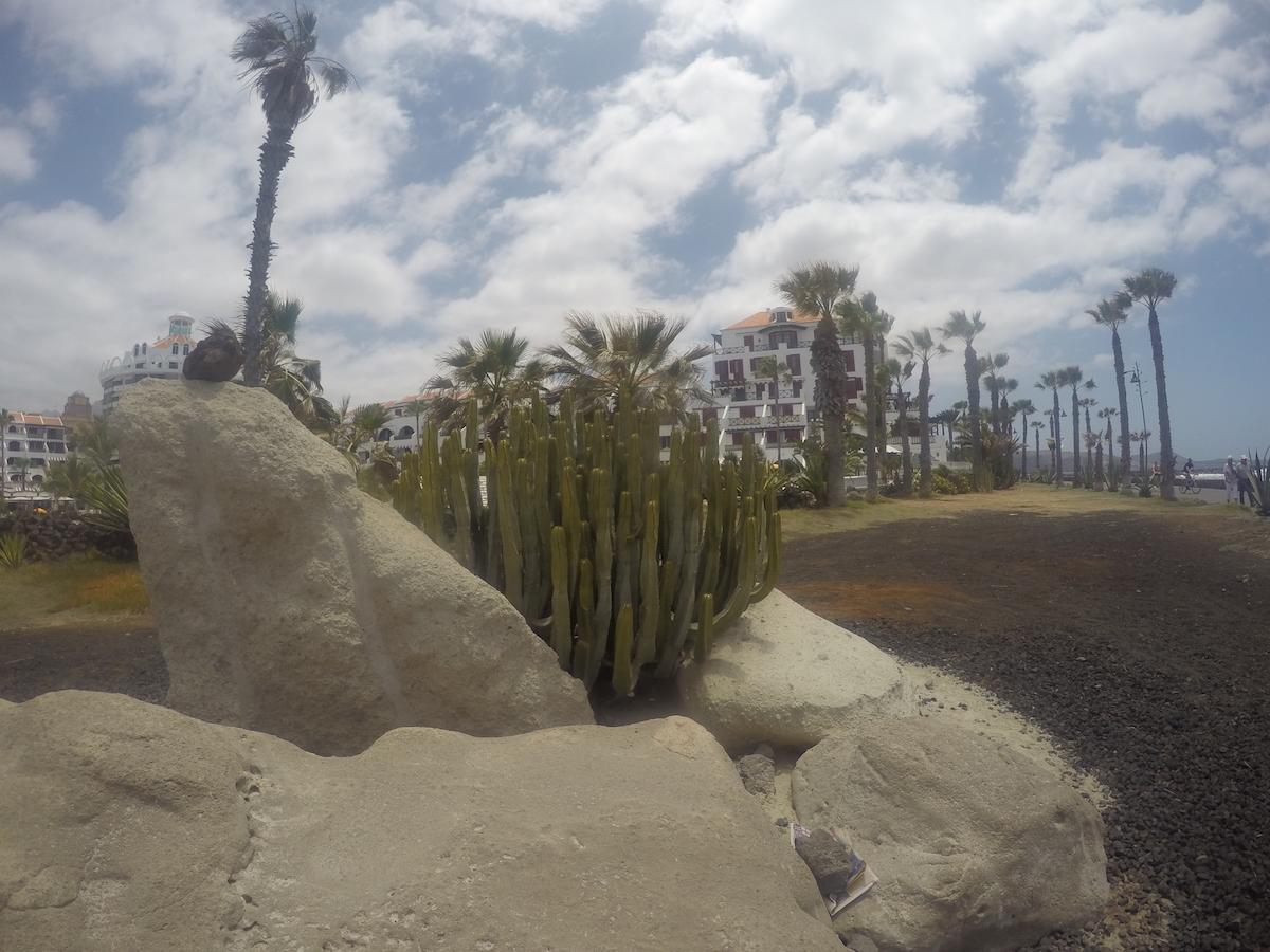 kőből kaktusz