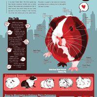 Mi is a tengerimalac?