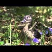Kezdésnek egy aranyos videó