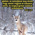 #teológus #olvastöbbet #hajasistvan_teologus #drhe #Debrecen #teologus_blog_hu #teologus #photooftheday #photoshop #yellow #kövess  #Biblia #maiige #napiige #ige