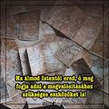 #teológus #teológusblog #ifjusági  #igésképek #ige #sárgateológus