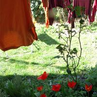 tulipános teregetős
