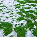 Májusi havazás