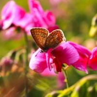 Pillangók a kaszás árnyékában