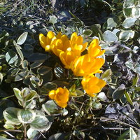 Tavaszi virágzás