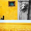 Sárga és olajzöld elmélkedés és összegzés
