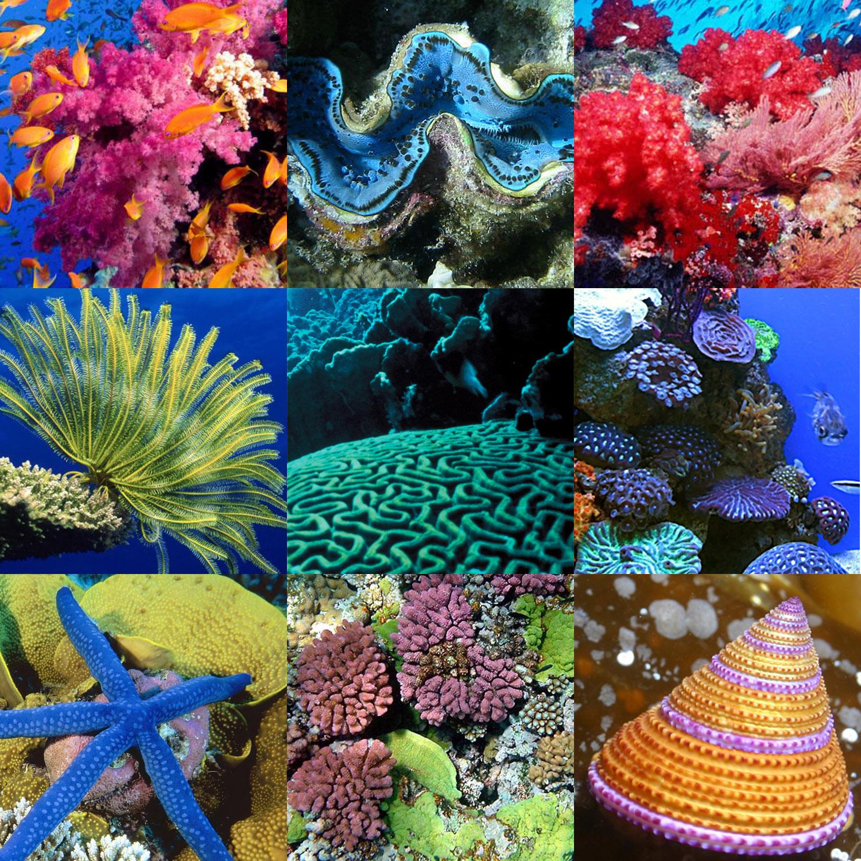 korallzátony.jpg