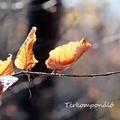 Az ősz utolsó üzenete