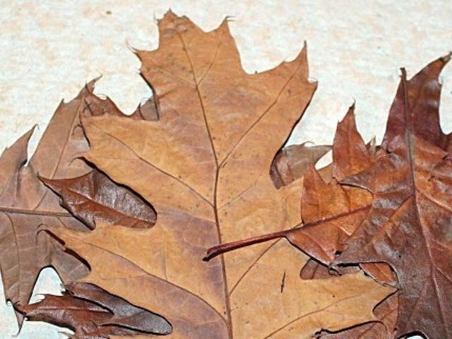 Last minute ősz, last minute falevél