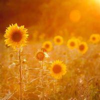 Hogyan varázsolj napfényes hangulatot magadnak?