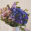 A tavasz hírnöke: az illatos ibolya