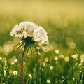 Tavaszi energetizálás gyógynövényekkel