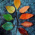 Az ősz csodái
