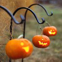 Tökös ősz