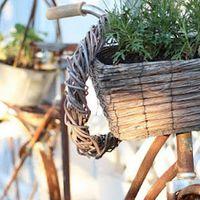 Mit üzennek a gyógynövények 2015 tavaszán?