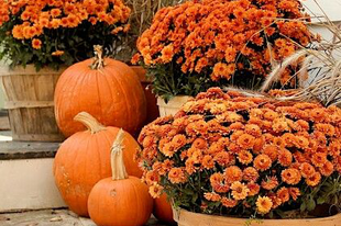 Itt van az ősz, itt van újra!