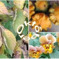 Október színei