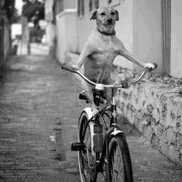 Biciklik új szerepben