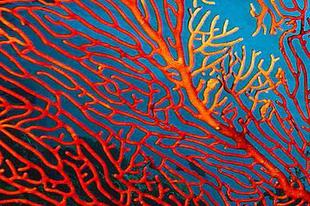 Korall inspirációk