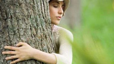 Hogyan gyógyítanak a fák?