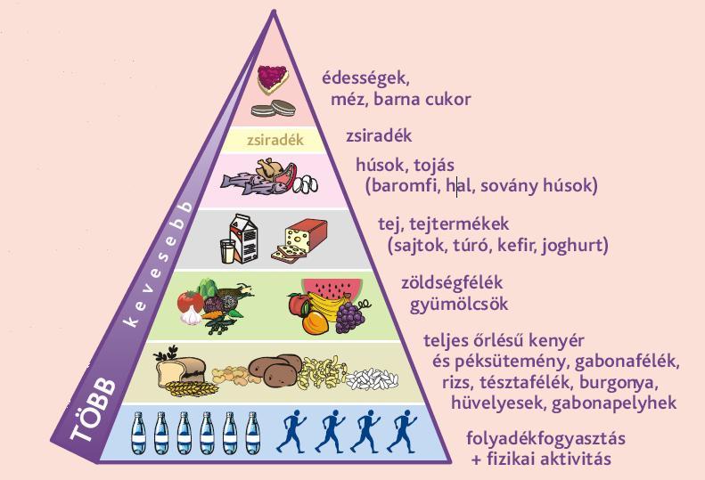 mi a helyes étrend