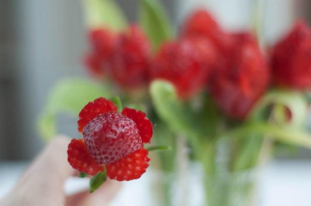 Anyáknapi rózsa eperből vagva4.jpg