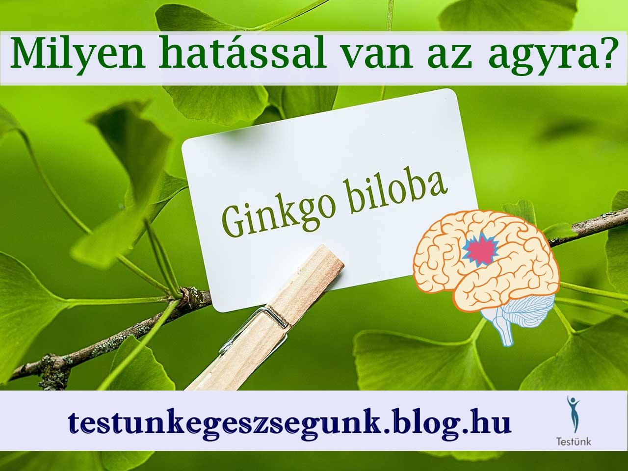 ginkgo-biloba_milyen_hatasa_van_az_agyra.jpg