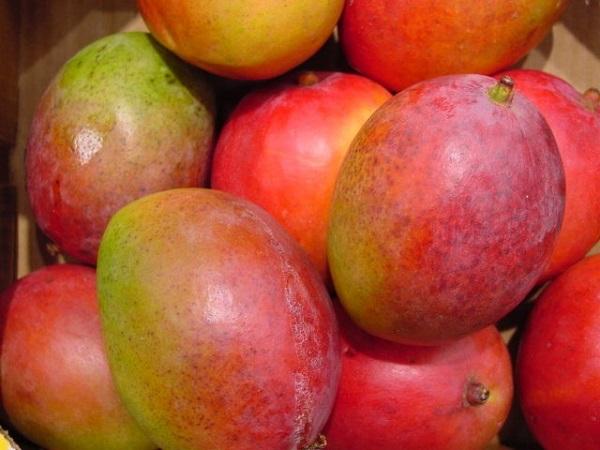 mango mánia.jpg