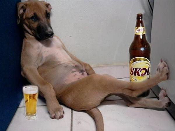 drunk dog.jpg