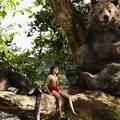 """""""A dzsungel törvénye kegyetlen"""""""