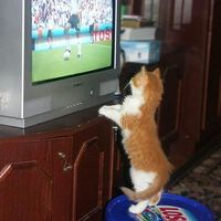 Tévhit #64: Sok nőt érdekel a foci és a Forma 1