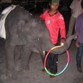 Legyen Ön is elefánt gondozó!