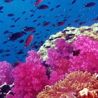 Korallvédelem miatt bezárt búvárparadicsomok