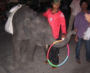 Játékos elefántbébi a bangkoki éjszakában.