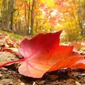 10 ok, amiért igenis az ősz-tél a legjobb időszak