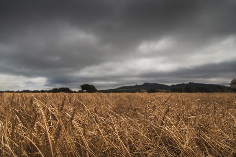 waterford-distillery_harvest-1.jpg