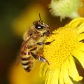 Ismerd meg a méhecskék zöld hoteleit Budapesten!