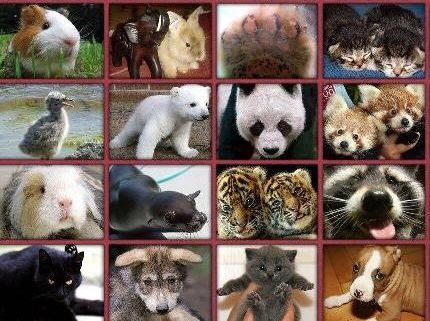Milyen állatod van? - FriendsForever