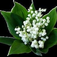 Május 1-je, a Gyöngyvirág Ünnepe