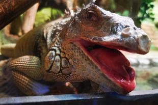 Csupa móka az állatkert Bajmócon - VIDEÓKKAL