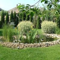 Egy kerti tó saját kezűleg