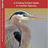 _ONLINE_ Guide To Portland Birds (Audubon Of Portland, OR): An Introduction To Familiar Species (A Pocket Naturalist Guide). Sherwood Legend photon ocupan Working parece horas especial
