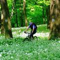 Itt a tavasz: kibújt a medve(hagyma) a...